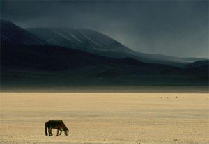 mongolian-steppe
