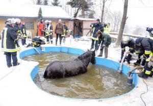 horse-in-a-pool_1777220i