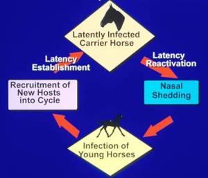 lifecyclelarge