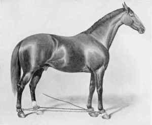 HORSE-HOBBLED