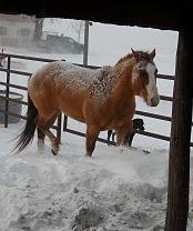 Snow.horse