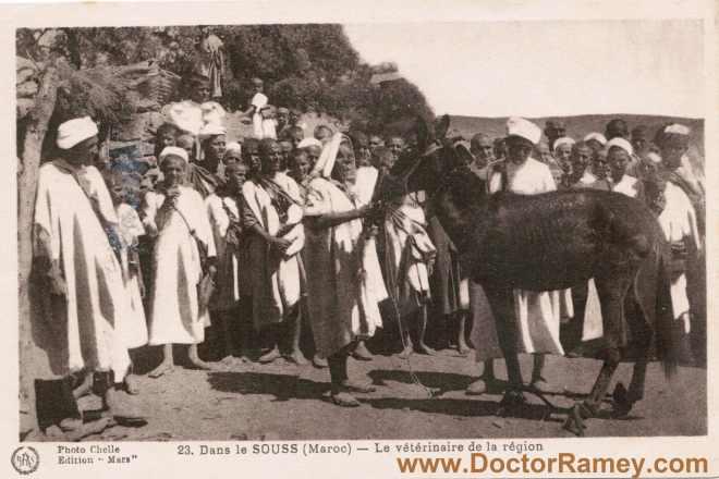 DoctorRamey.com(donkey)