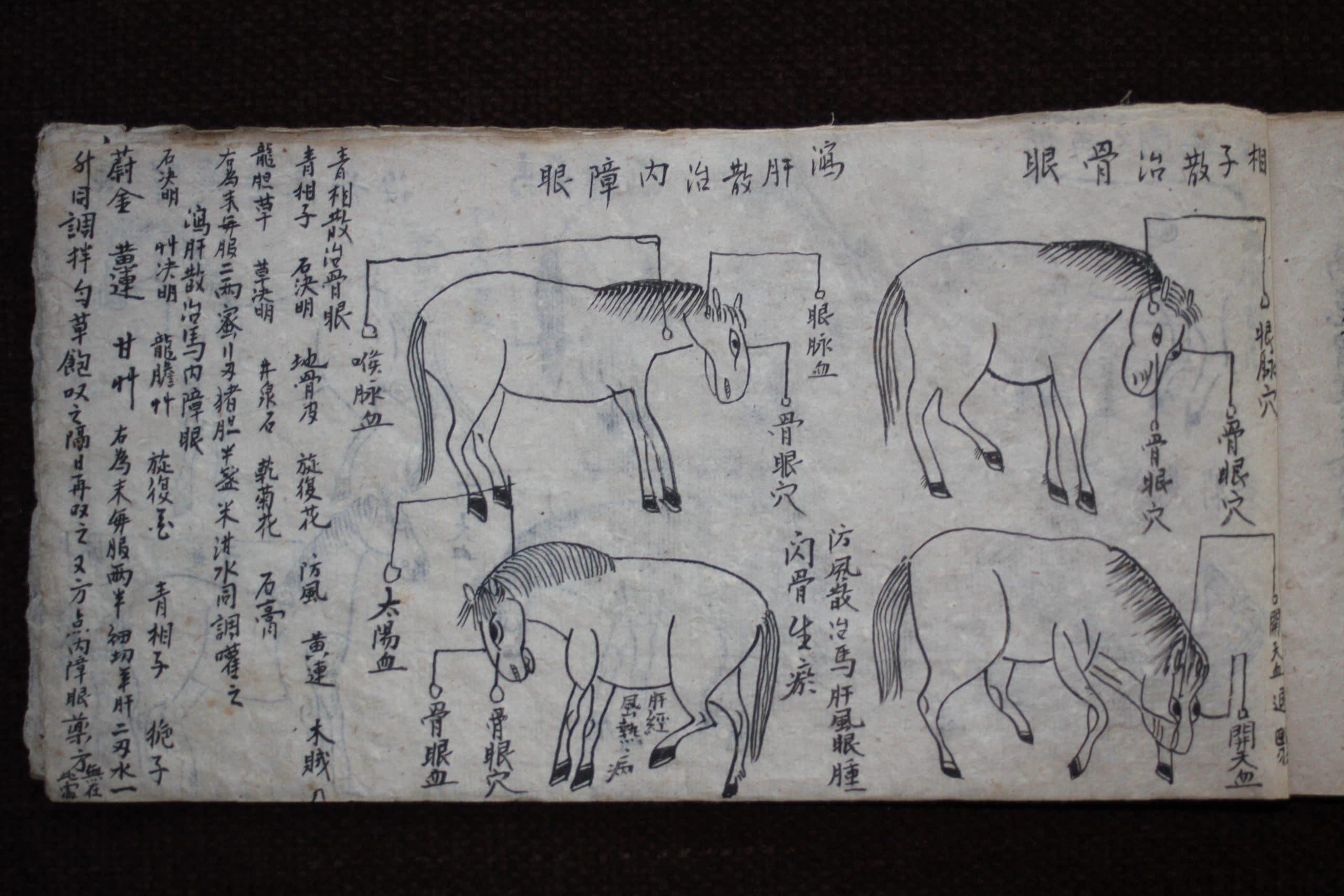 """Traditional"" Chinese Veterinary Medicine"