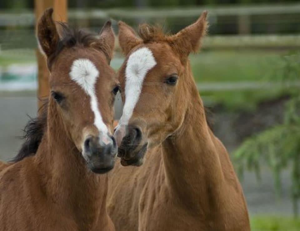 foals - photo #42