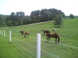 Horse heaven.  Parasite heaven, too.