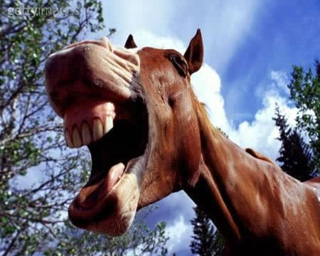 horse_teeth1.jpg