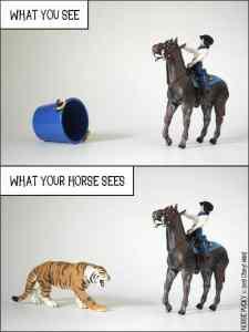 Horse.Vision.1