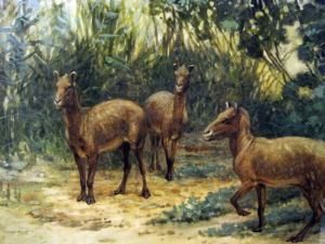 Prehistoric eohippus. See, no shoes. Told you!