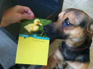 Duck, at Easter, and his avatar