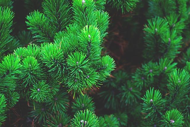 Pinene Terpene