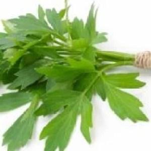 Susține sănătatea colonului, antiinflamator, calmant al stomacului. Beneficiile uimitoare pentru sănătate ale uneia dintre cele mai iubite plante a...