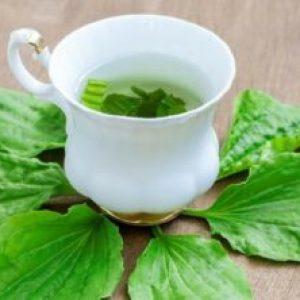 Cel mai bun ceai pentru stomac. Combate paraziții intestinali și ulcerul stomacal