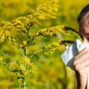 """Alergia la ambrozie. Tudor Ciuhodaru: """"Reacția alergică declanșată poate fi letală! 10 lucruri care vă pot salva viața"""""""