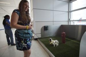 Hestia peeing in the dog relief ara