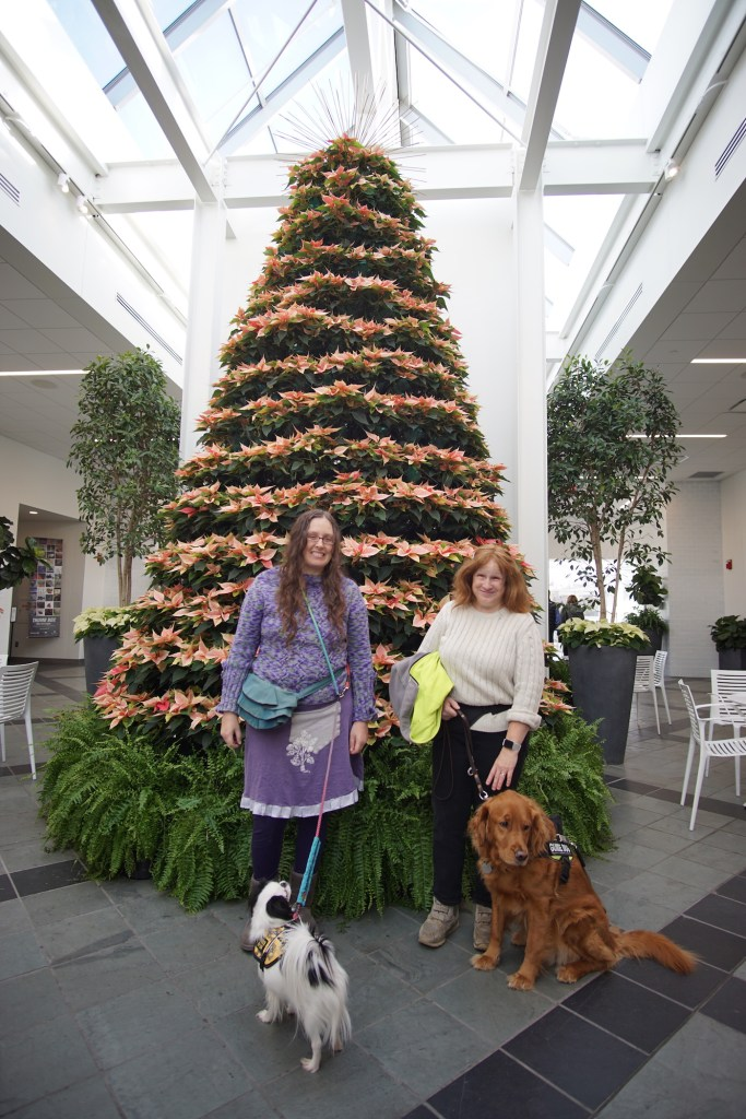 Veronica is wearing purple leggings, a purple skirt with a big grey pocket made by her friend Jessica, and a purple and green sweater that she knitted herself. Jenine is wearing an off-white sweater and brown pants. Hestia has on her Hufflepuff vest, while Roger is wearing his Julius K9 harness. They are all standing in front of a big tree made of poinsettias.