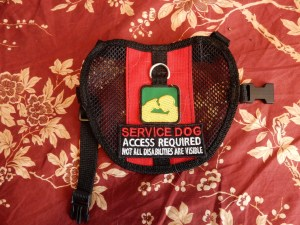 """Red vest with black mesh sides.  PSDP patch under the D ring, and then a patch that says """"service dog, access required, not all disabilities are visible""""."""