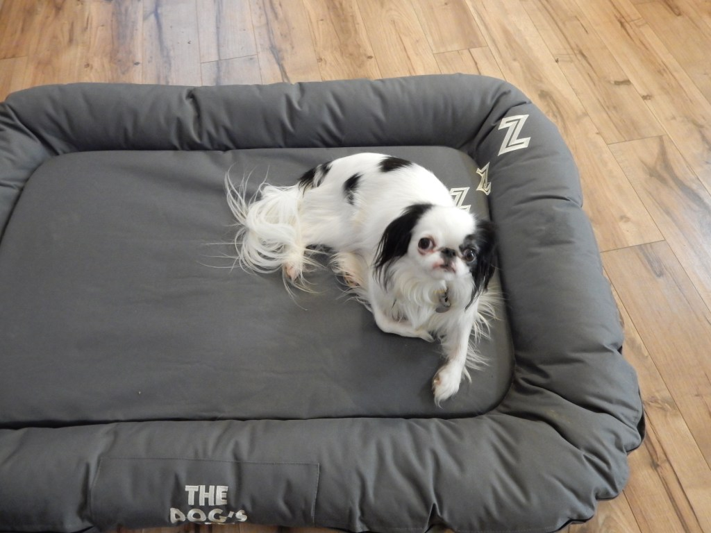 Hestia on Ollie's bed.  She is so tiny she only takes up about a quarter of the bed!