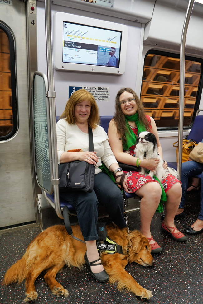 Jenine, a woman in a white sweater and red hair, has her red Golden guide dog Roger at her feet on the subway.  Veronica, wearing a red sugar skull dress with a green solidarity scarf and holding Hestia, sits next to her.  Both women are smiling.  Oh and Jenine has her solidarity scarf tied around her waist.