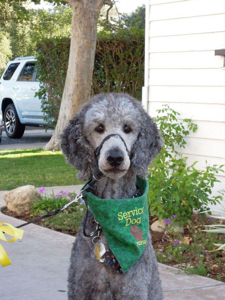 Ollie wearing a green PSDP bandana.