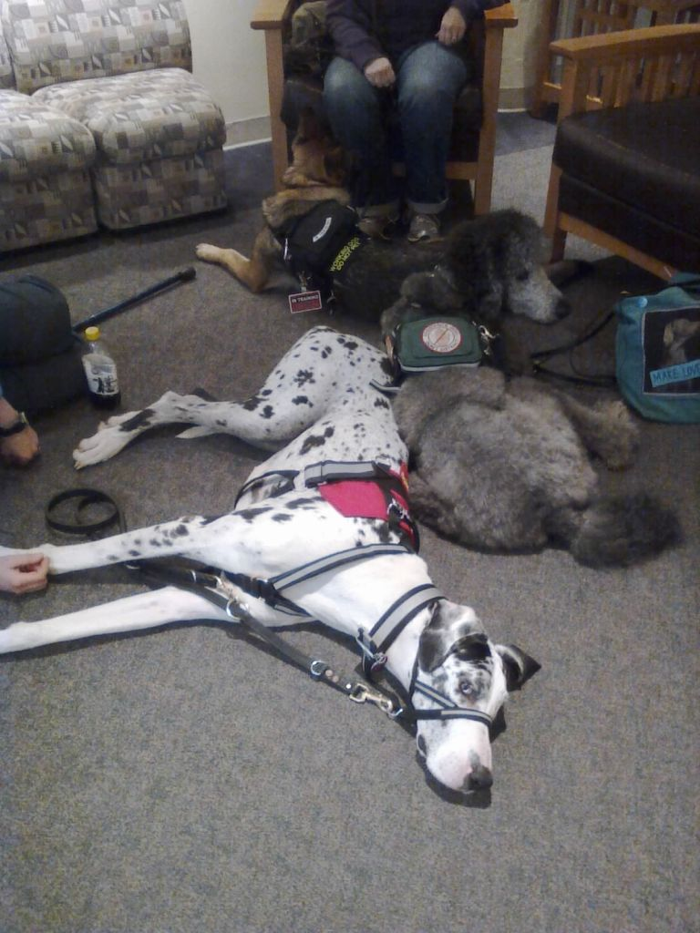 Puppy pile!  Gracie (Great Dane), Iris, and Ollie cuddled up on the floor together.
