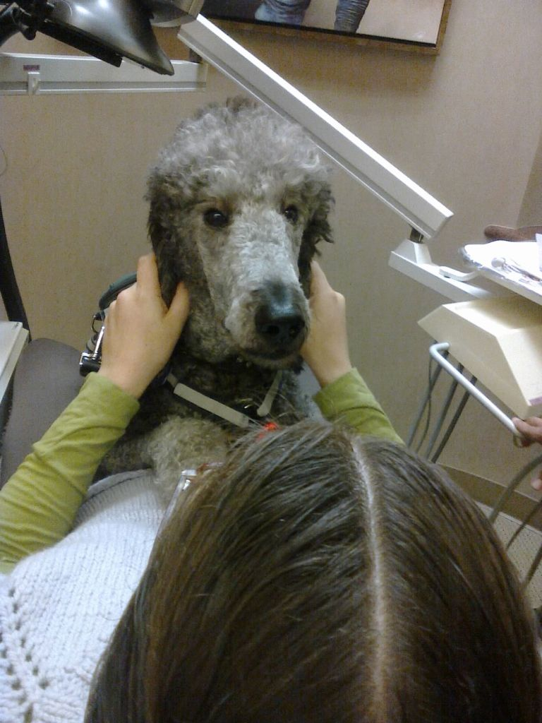 A shot of Ollie on Veronica's lap at the dentist taken from behind Veronica's head.