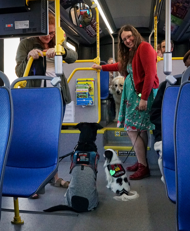Kilo and Hestia are inches apart sitting while their owners stand on the bus.  In the background, Avalanche looks on.