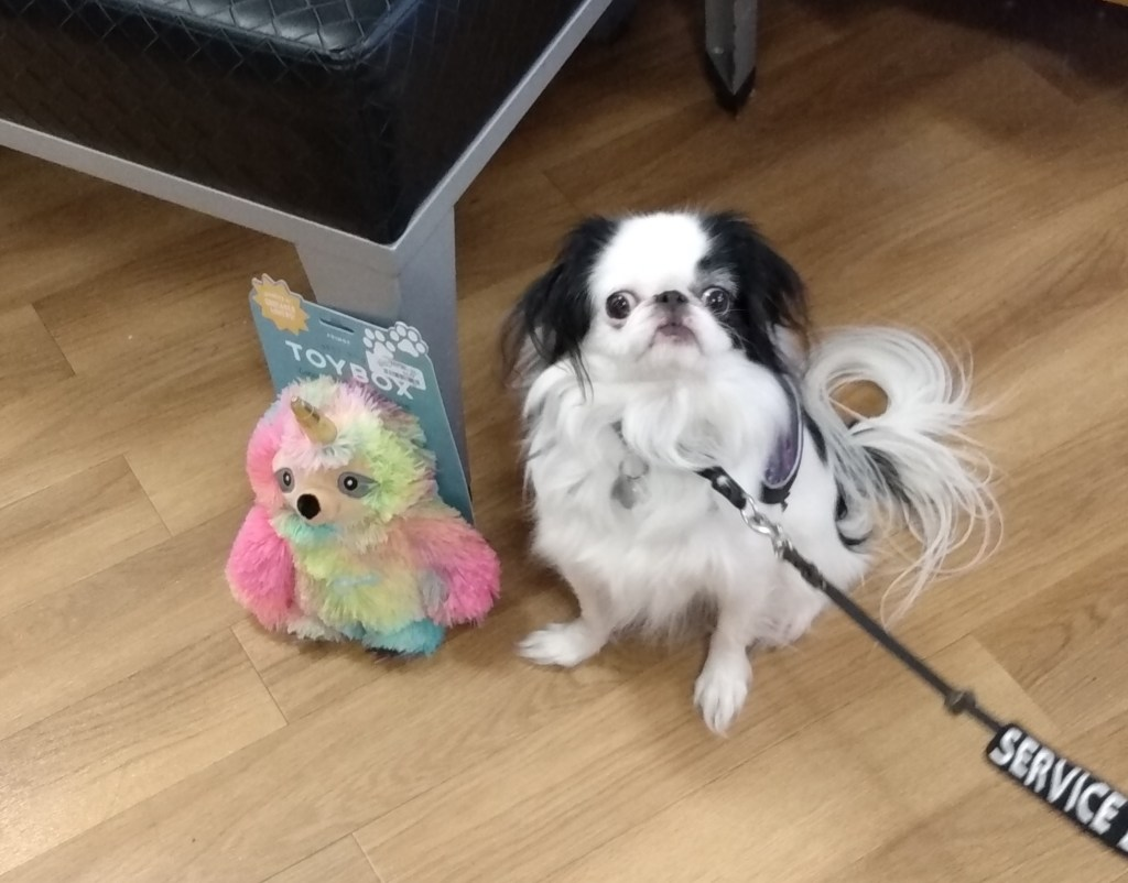 Hestia with the unicorn sloth toy in the store, she is doing a good job of ignoring it!