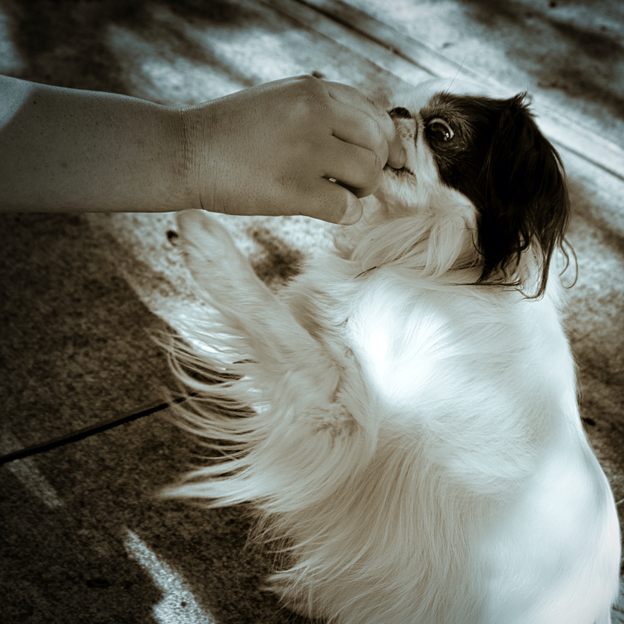 Sepia photo of Hestia taking a treat, and her hand is raised as if to touch Veronica's hand.