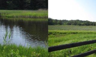 芝谷地湿原植物群落(国指定天然記念物)