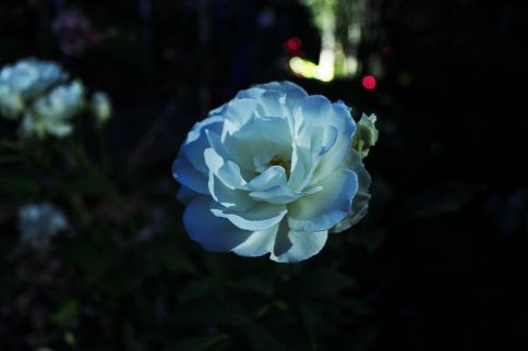バラまつり・ナイトガーデン*フィナーレ