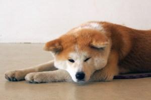 akitainunono_08