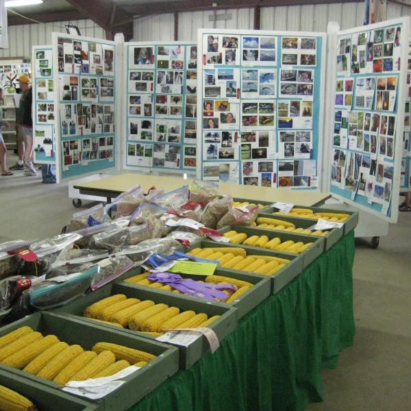 4-H & FFA Members Display Year's Accomplishments at Dodge County Fair