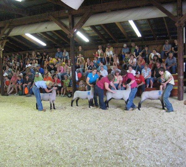 Little Shepherds Showmanship Contest
