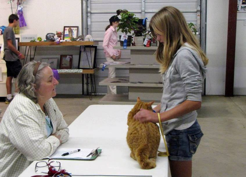 Cat Showmanship Junior Fair