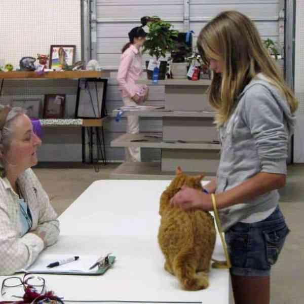 Junior Fair Cat Judging Results