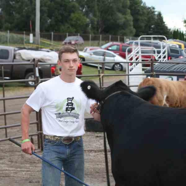 Junior Fair Beef Breeding and Feeder Calves Judging