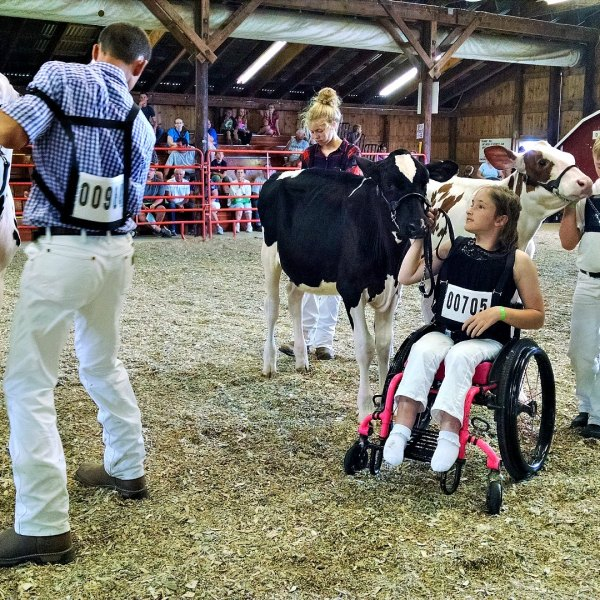 No excuses… Powers leads calf at Junior Dairy Show