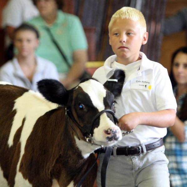 Dodge County 4-H and FFA youth strive for title of Supreme Livestock Showman