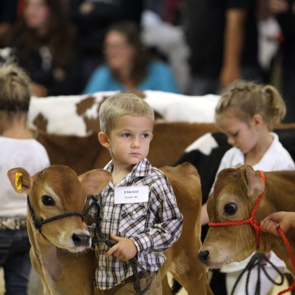 Little Britches Showmanship Contest
