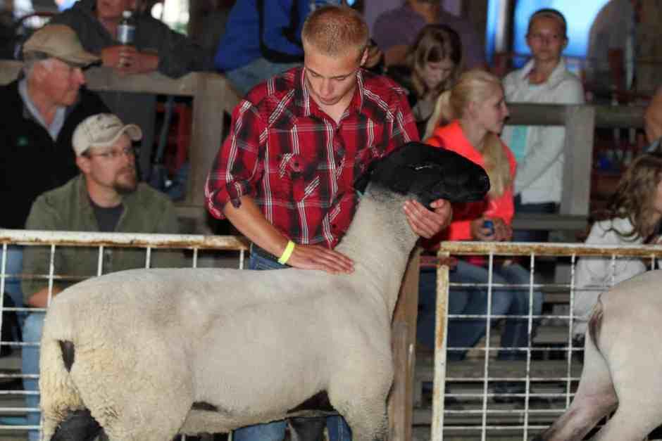 Sheep Show Judge Beaver Dam WI