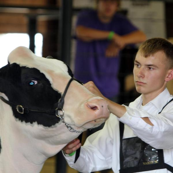 Junior Fair Dairy Show
