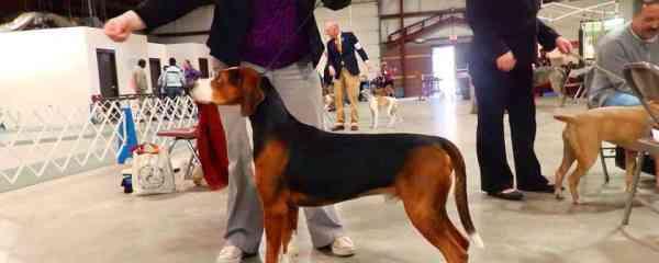 UKC Dog Show open to spectators