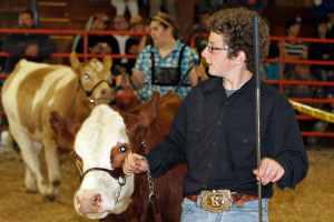 open class beef cattle judging