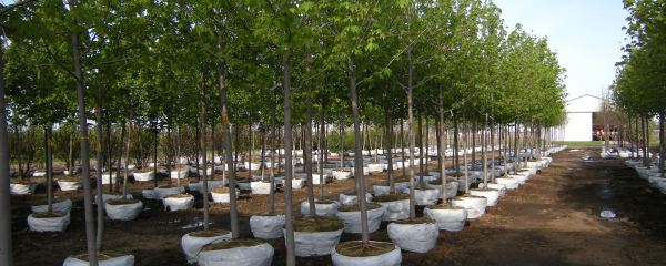 Plant a Tree in Loving Memory