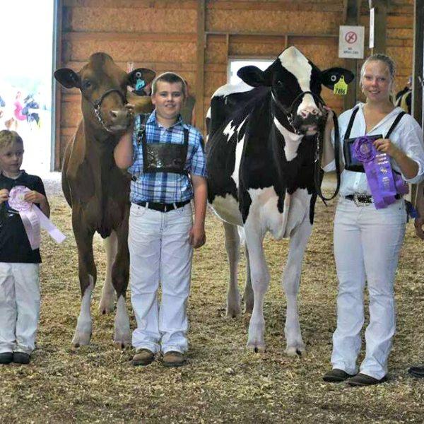 Wisconsin Holstein Association District 8 Show