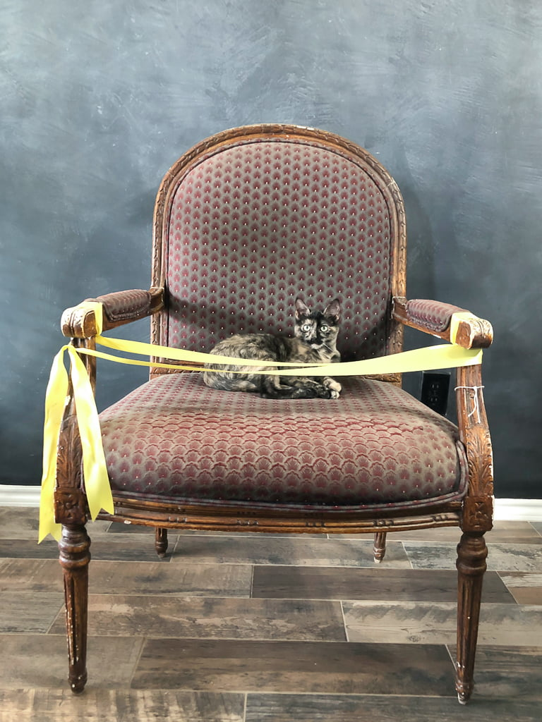 Not even yellow caution tape could keep my cat off of this vintage armchair. It was love at first sight!