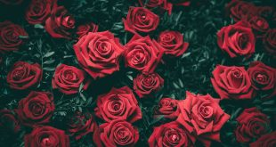 18 Special Name Day Flowers and Gifts