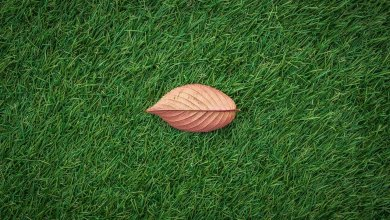 How to Take Care of Artificial Grass You Need to Know