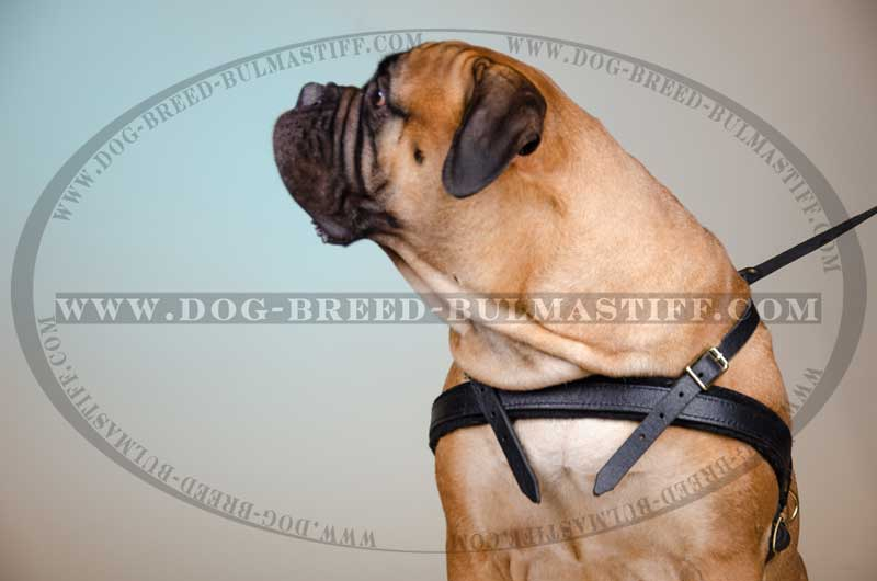 Superb Leather Harness For Tracking Training Pulling H5