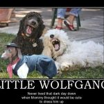 Little Wolfgang